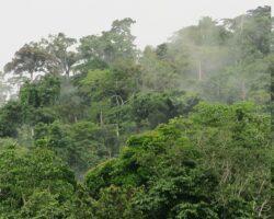 Forest Landscape Restoration/Forest Restoration