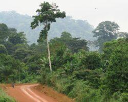 Community Based Forest Monitoring/Management